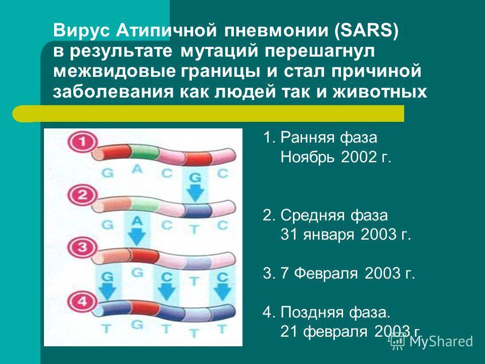 Вирус Атипичной пневмонии (SARS) в результате мутаций перешагнул межвидовые границы и стал причиной заболевания как людей так и животных 1. Ранняя фаза Ноябрь 2002 г. 2. Средняя фаза 31 января 2003 г. 3. 7 Февраля 2003 г. 4. Поздняя фаза. 21 февраля