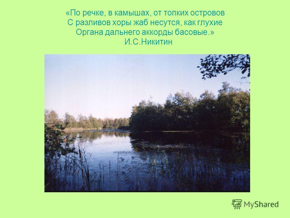 «По речке, в камышах, от топких островов С разливов хоры жаб несутся, как глухие Органа дальнего аккорды басовые.» И.С.Никитин