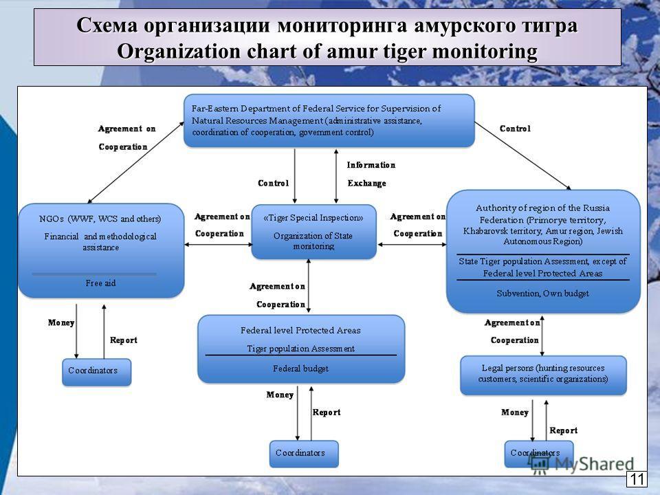 11 Схема организации мониторинга амурского тигра Organization chart of amur tiger monitoring