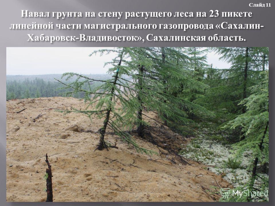 Навал грунта на стену растущего леса на 23 пикете линейной части магистрального газопровода « Сахалин - Хабаровск - Владивосток », Сахалинская область. Слайд 11