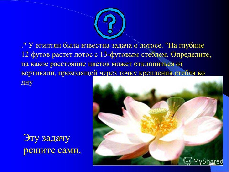 . У египтян была известна задача о лотосе. На глубине 12 футов растет лотос с 13-футовым стеблем. Определите, на какое расстояние цветок может отклониться от вертикали, проходящей через точку крепления стебля ко дну Эту задачу решите сами.