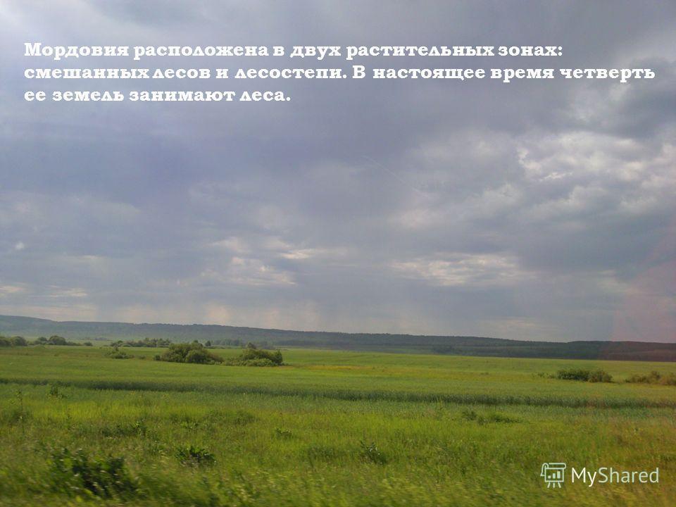 Мордовия расположена в двух растительных зонах: смешанных лесов и лесостепи. В настоящее время четверть ее земель занимают леса.