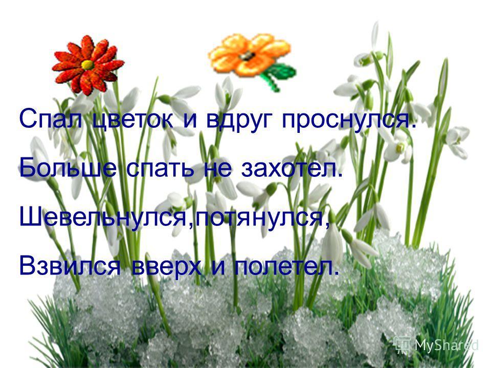 Спал цветок и вдруг проснулся. Больше спать не захотел. Шевельнулся,потянулся, Взвился вверх и полетел.