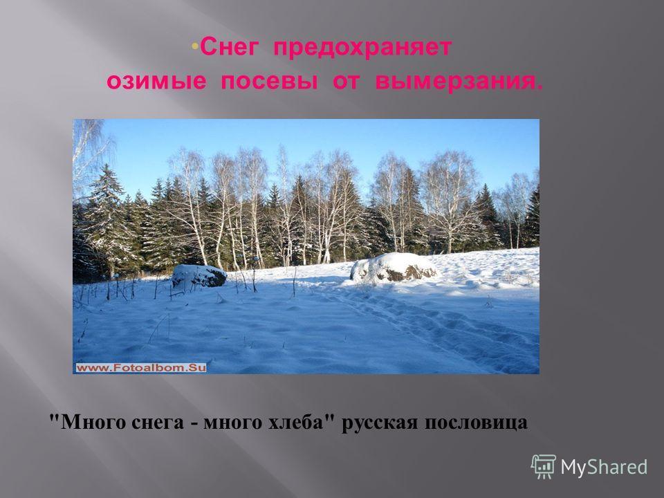 Снег предохраняет озимые посевы от вымерзания.  Много снега - много хлеба  русская пословица