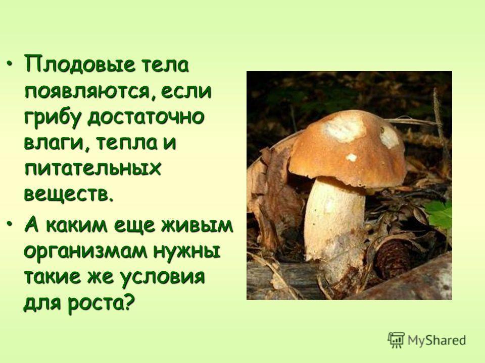 Плодовые тела появляются если грибу