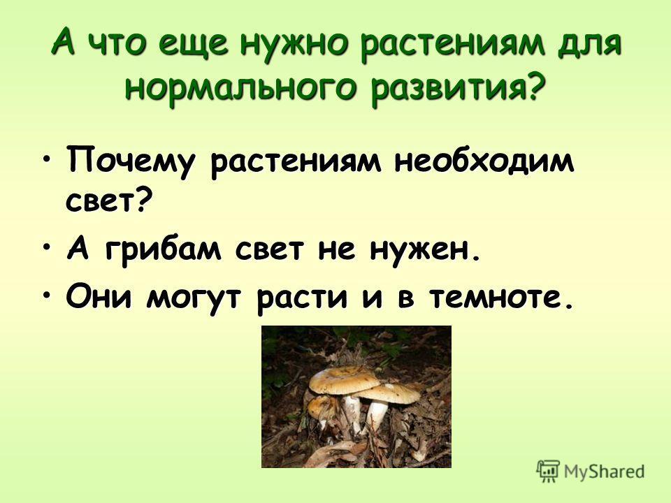 А что еще нужно растениям для нормального развития? Почему растениям необходим свет? А грибам свет не нужен. Они могут расти и в темноте.