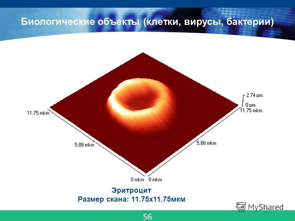 COMPANY LOGO Эритроцит Размер скана: 11.75x11.75мкм Биологические объекты (клетки, вирусы, бактерии) 56