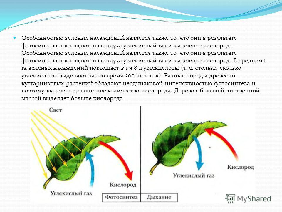Газозащитная роль зеленых насаждений Зеленые насаждения значительно уменьшают вредную концентрацию находящихся в воздухе газов. Например, концентрация окислов азота, выбрасываемых промышленными предприятиями, снижается на расстоянии 1 км от места выб