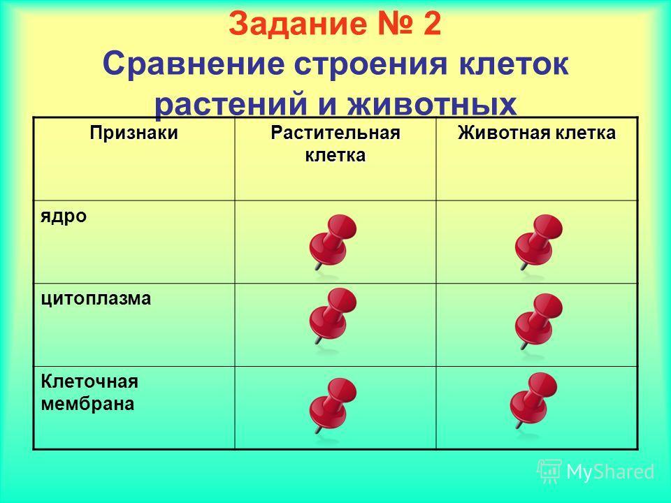 Задание 2 Сравнение строения клеток растений и животных Признаки Растительная клетка Животная клетка ядро цитоплазма Клеточная мембрана