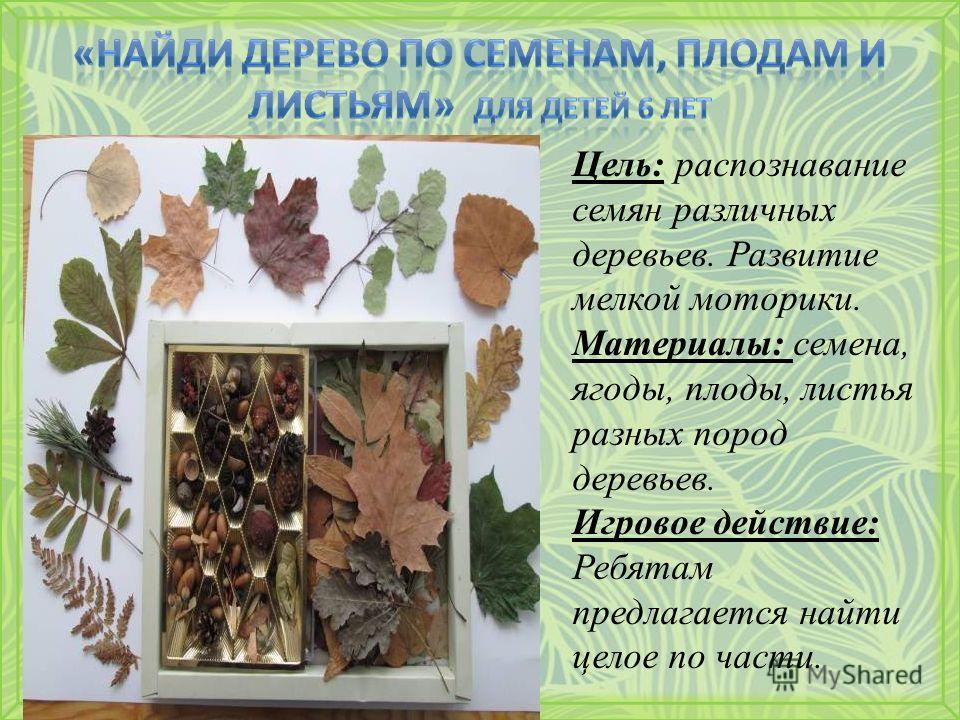 Цель: распознавание семян различных деревьев. Развитие мелкой моторики. Материалы: семена, ягоды, плоды, листья разных пород деревьев. Игровое действие: Ребятам предлагается найти целое по части.