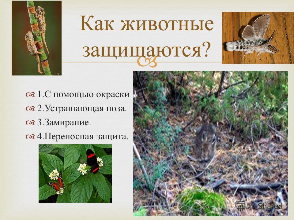 1. С помощью окраски 2. Устрашающая поза. 3. Замирание. 4. Переносная защита. Как животные защищаются ?