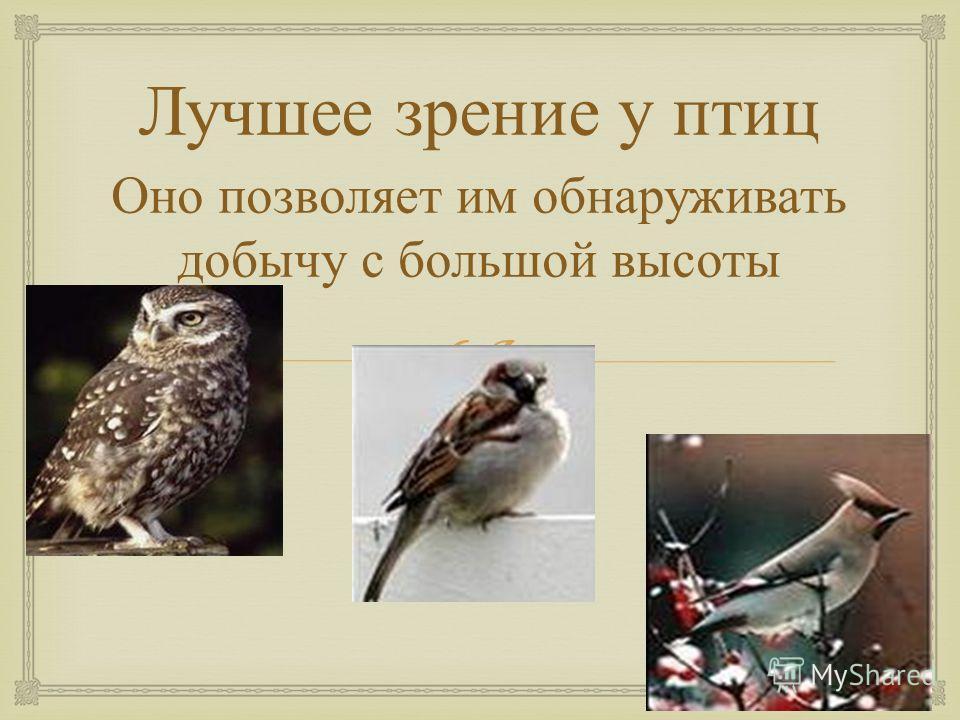 Лучшее зрение у птиц Оно позволяет им обнаруживать добычу с большой высоты