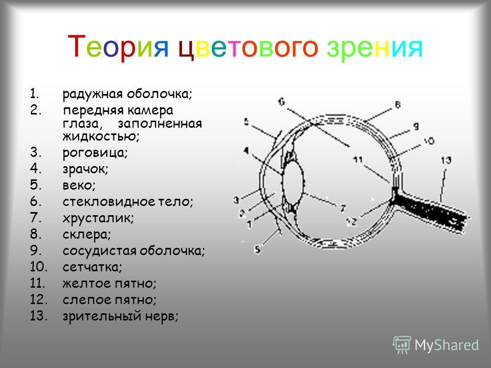 Теория цветового зрения 1.радужная оболочка; 2.передняя камера глаза, заполненная жидкостью; 3.роговица; 4.зрачок; 5.веко; 6.стекловидное тело; 7.хрусталик; 8.склера; 9.сосудистая оболочка; 10.сетчатка; 11.желтое пятно; 12.слепое пятно; 13.зрительный