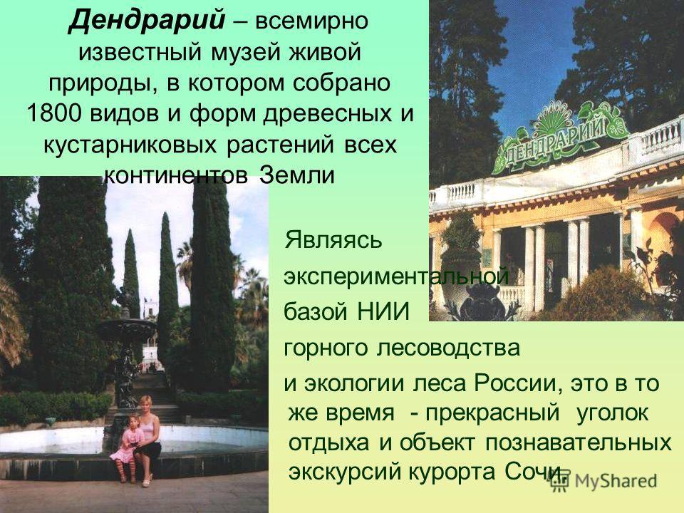 Являясь экспериментальной базой НИИ горного лесоводства и экологии леса России, это в то же время - прекрасный уголок отдыха и объект познавательных экскурсий курорта Сочи. Дендрарий – всемирно известный музей живой природы, в котором собрано 1800 ви