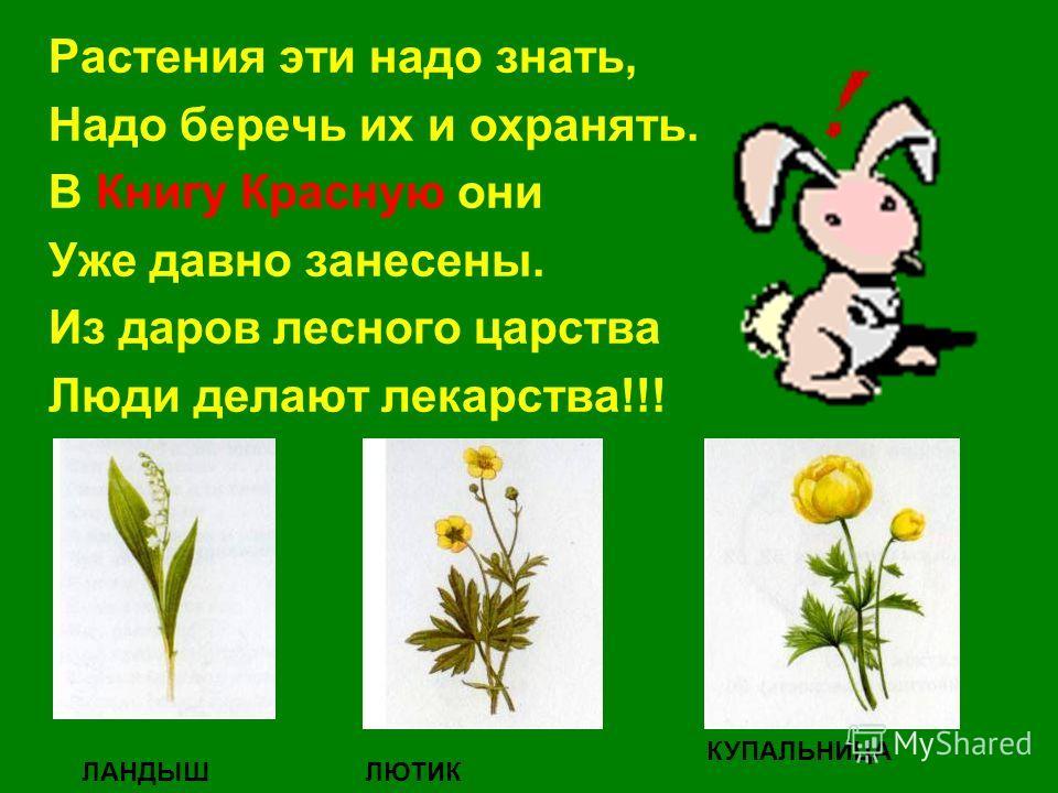 Растения эти надо знать, Надо беречь их и охранять. В Книгу Красную они Уже давно занесены. Из даров лесного царства Люди делают лекарства!!! ЛАНДЫШЛЮТИК КУПАЛЬНИЦА