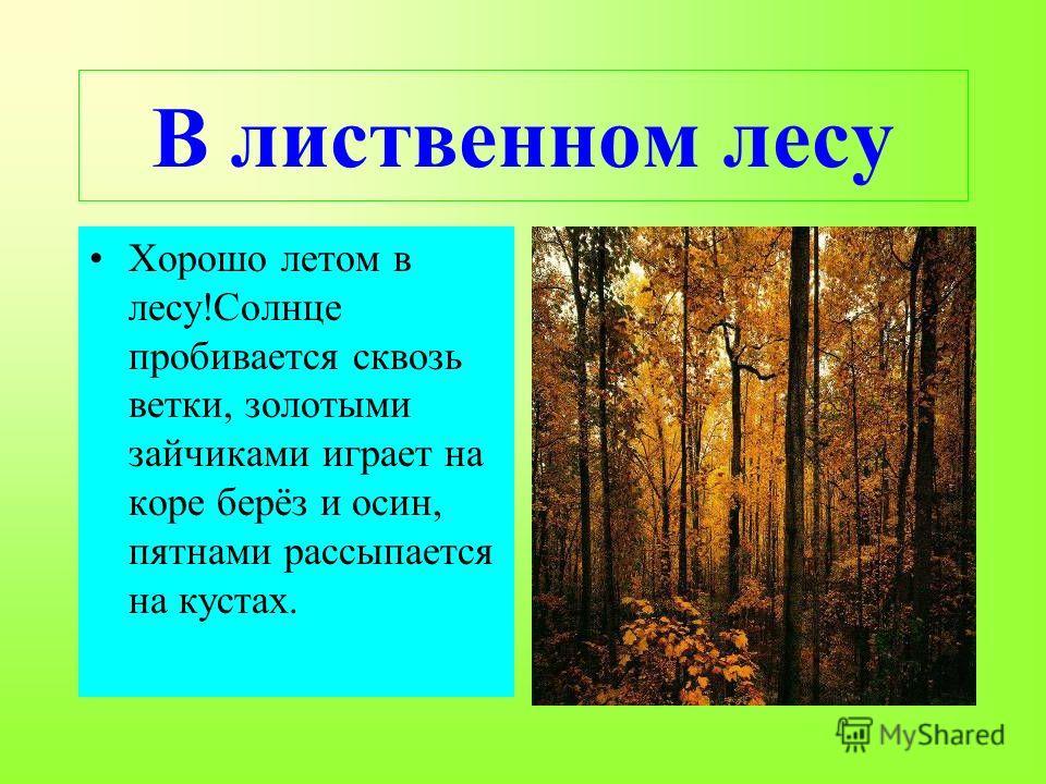 В лиственном лесу Хорошо летом в лесу!Солнце пробивается сквозь ветки, золотыми зайчиками играет на коре берёз и осин, пятнами рассыпается на кустах.