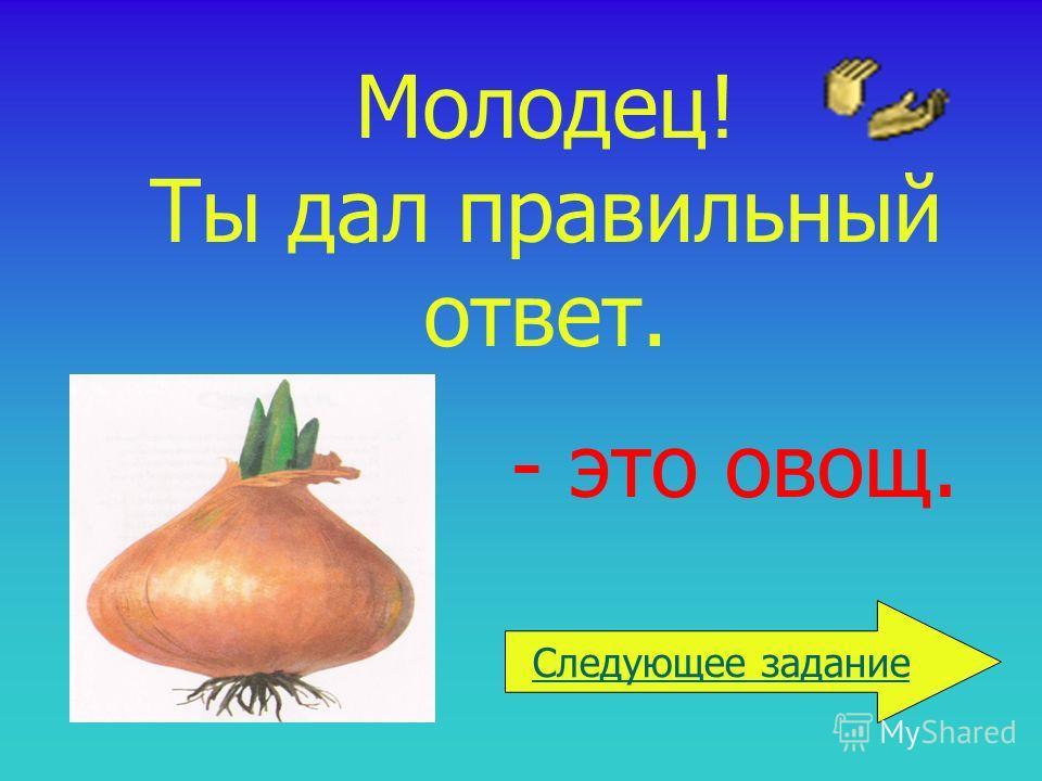 Молодец! Ты дал правильный ответ. - это овощ. Следующее задание