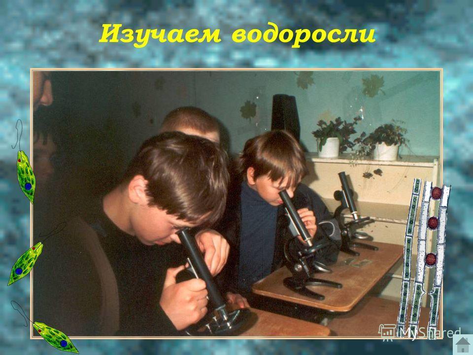 Изучаем водоросли