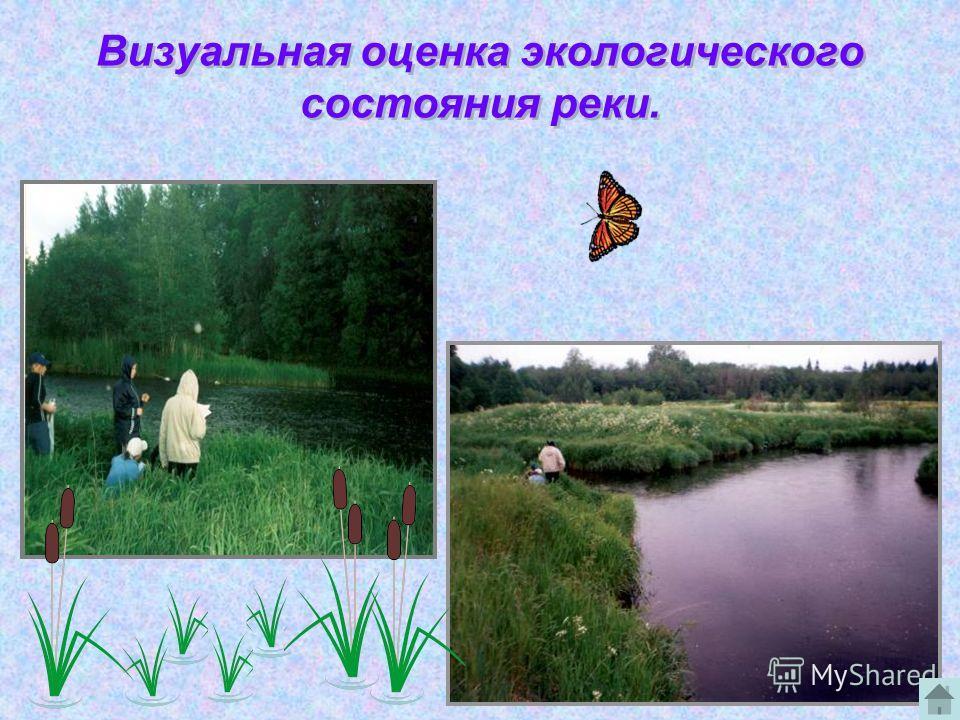 Визуальная оценка экологического состояния реки.