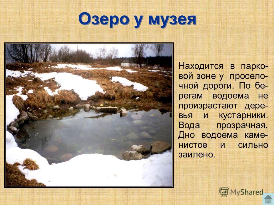 Озеро у музея Находится в парко- вой зоне у просело- чной дороги. По бе- регам водоема не произрастают дере- вья и кустарники. Вода прозрачная. Дно водоема каме- нистое и сильно заилено.