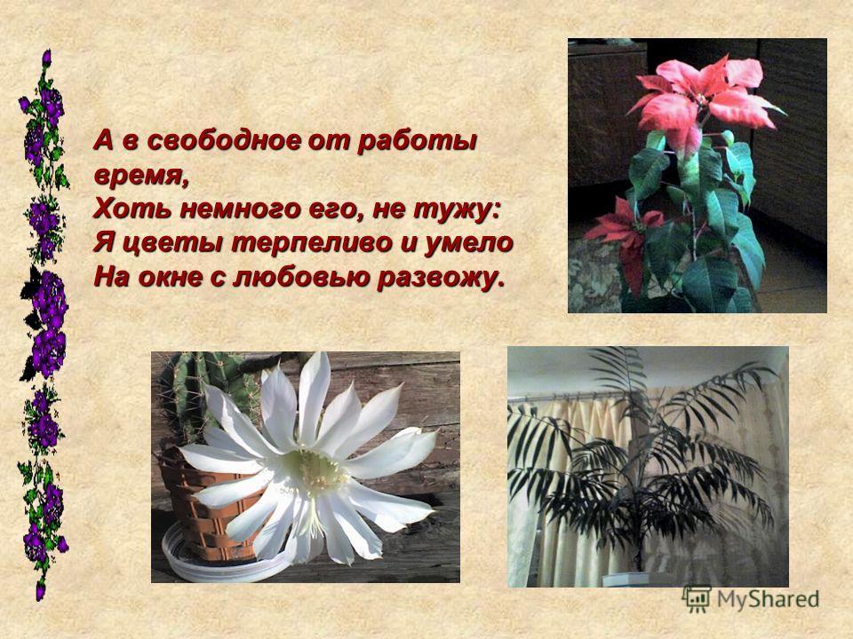 А в свободное от работы время, Хоть немного его, не тужу: Я цветы терпеливо и умело На окне с любовью развожу.