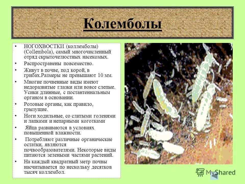 Кивсяк ДВУПАРНОНОГИЕ (Diplopoda), класс членистоногих из группы многоножек. На большинстве туловищных сегментов по 2 пары ног. Около 50 тыс. видов. Распространены на всех континентах, кроме Антарктиды. Питаются растительными остатками, некоторые повр