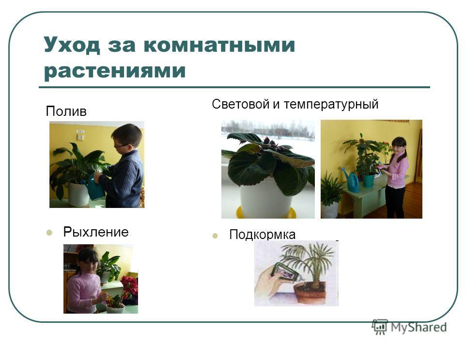 Уход за комнатным растениями в домашних условиях 136