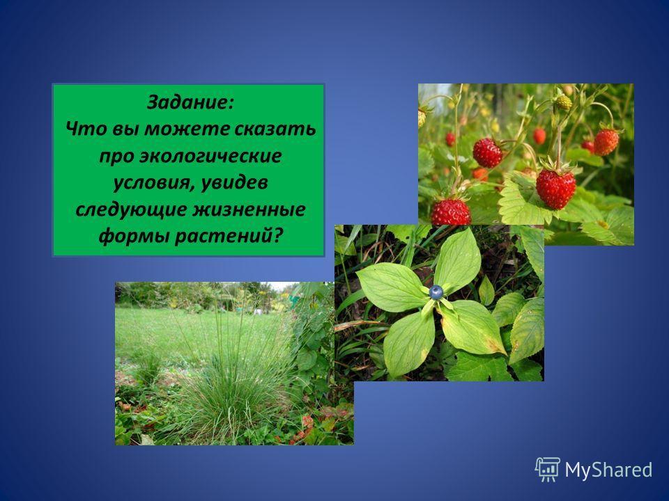 Задание: Что вы можете сказать про экологические условия, увидев следующие жизненные формы растений?
