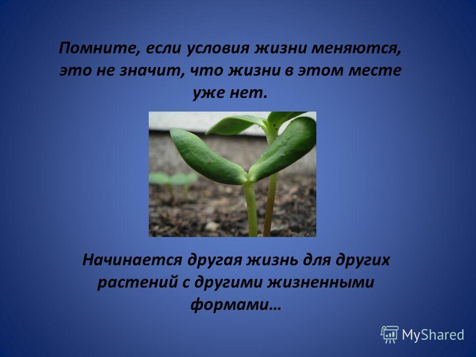 Начинается другая жизнь для других растений с другими жизненными формами… Помните, если условия жизни меняются, это не значит, что жизни в этом месте уже нет.