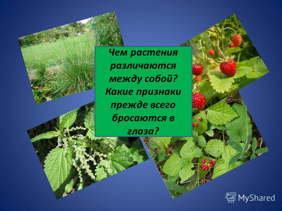 Чем растения различаются между собой? Какие признаки прежде всего бросаются в глаза?