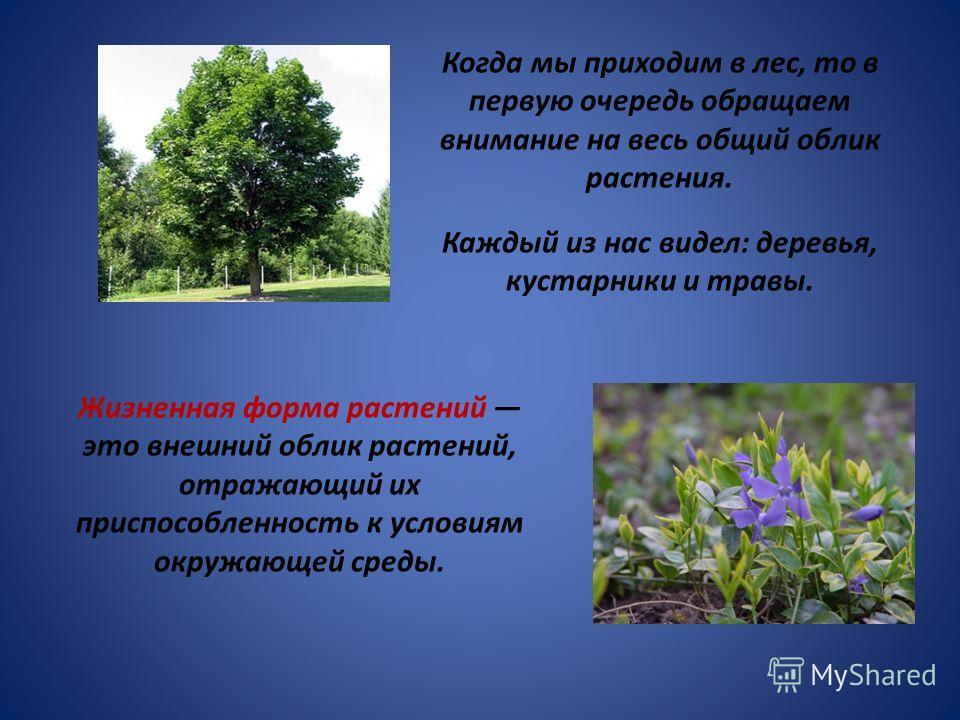 Когда мы приходим в лес, то в первую очередь обращаем внимание на весь общий облик растения. Каждый из нас видел: деревья, кустарники и травы. Жизненная форма растений это внешний облик растений, отражающий их приспособленность к условиям окружающей