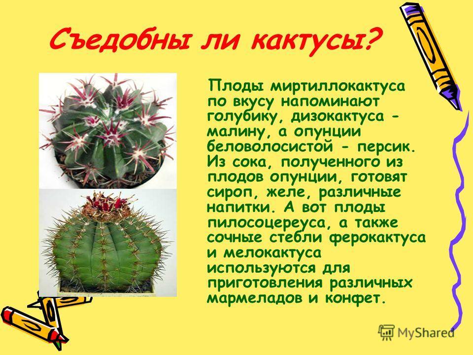 Съедобны ли кактусы? Плоды миртиллокактуса по вкусу напоминают голубику, дизокактуса - малину, а опунции беловолосистой - персик. Из сока, полученного из плодов опунции, готовят сироп, желе, различные напитки. А вот плоды пилосоцереуса, а также сочны