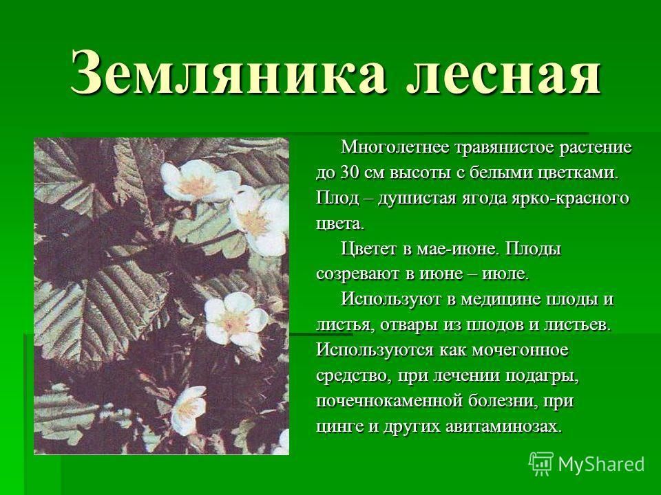 Земляника лесная Многолетнее травянистое растение до 30 см высоты с белыми цветками. Плод – душистая ягода ярко-красного цвета. Цветет в мае-июне. Плоды созревают в июне – июле. Используют в медицине плоды и листья, отвары из плодов и листьев. Исполь