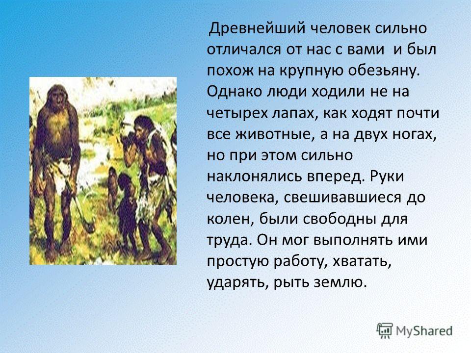 Древнейший человек сильно отличался от нас с вами и был похож на крупную обезьяну. Однако люди ходили не на четырех лапах, как ходят почти все животные, а на двух ногах, но при этом сильно наклонялись вперед. Руки человека, свешивавшиеся до колен, бы