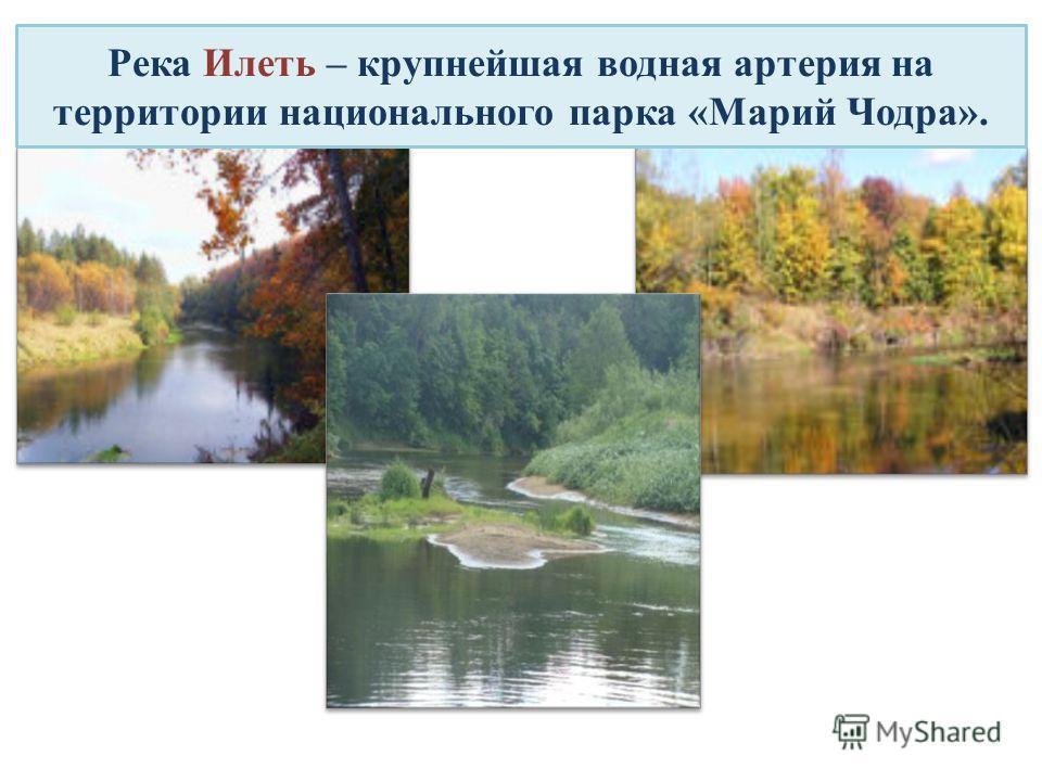 Река Илеть – крупнейшая водная артерия на территории национального парка «Марий Чодра».