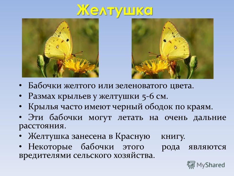 Желтушка Бабочки желтого или зеленоватого цвета. Размах крыльев у желтушки 5-6 см. Крылья часто имеют черный ободок по краям. Эти бабочки могут летать на очень дальние расстояния. Желтушка занесена в Красную книгу. Некоторые бабочки этого рода являют