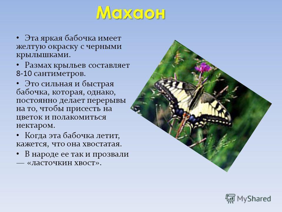 Махаон Эта яркая бабочка имеет желтую окраску с черными крылышками. Размах крыльев составляет 8-10 сантиметров. Это сильная и быстрая бабочка, которая, однако, постоянно делает перерывы на то, чтобы присесть на цветок и полакомиться нектаром. Когда э