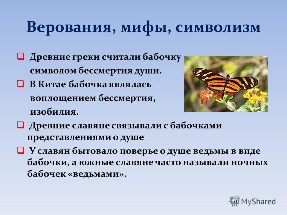 Верования, мифы, символизм Древние греки считали бабочку символом бессмертия души. В Китае бабочка являлась воплощением бессмертия, изобилия. Древние славяне связывали с бабочками представлениями о душе У славян бытовало поверье о душе ведьмы в виде
