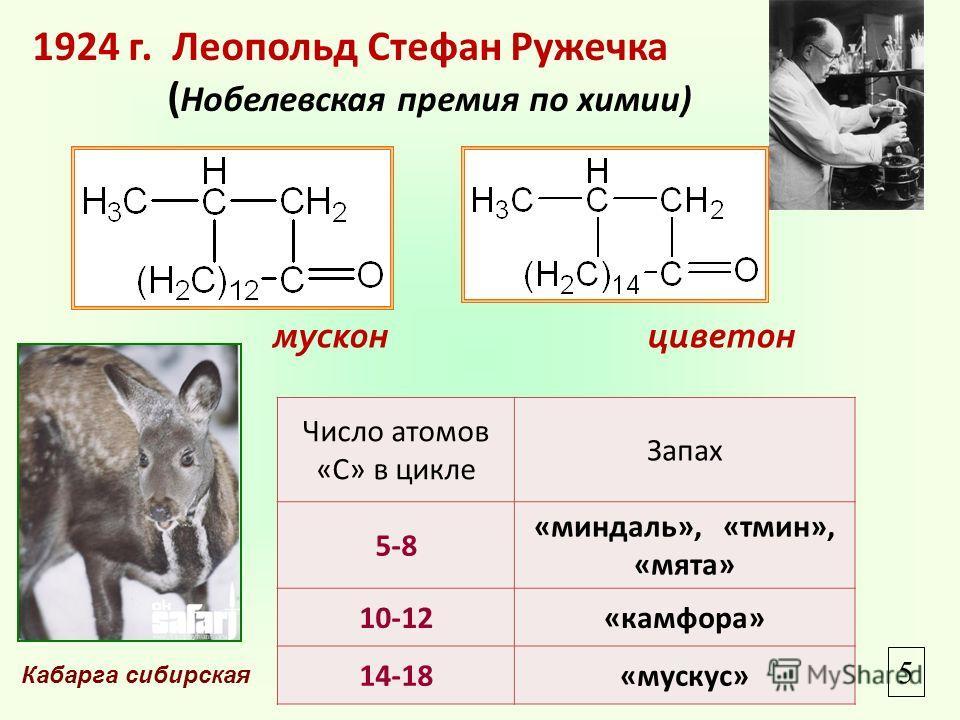 1924 г. Леопольд Стефан Ружечка ( Нобелевская премия по химии) мускон Число атомов «С» в цикле Запах 5-8 «миндаль», «тмин», «мята» 10-12«камфора» 14-18«мускус» Кабарга сибирская 5 циветон