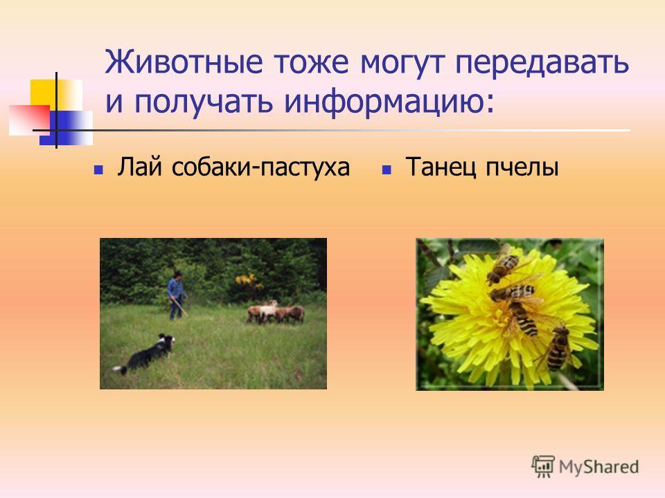 Животные тоже могут передавать и получать информацию: Лай собаки-пастуха Танец пчелы