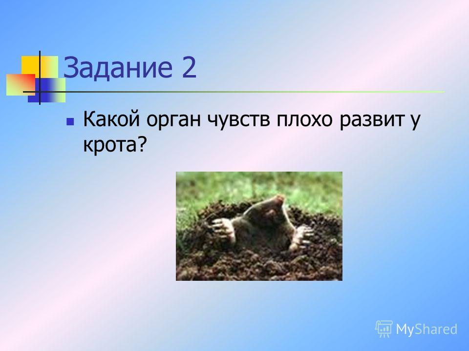 Задание 2 Какой орган чувств плохо развит у крота?