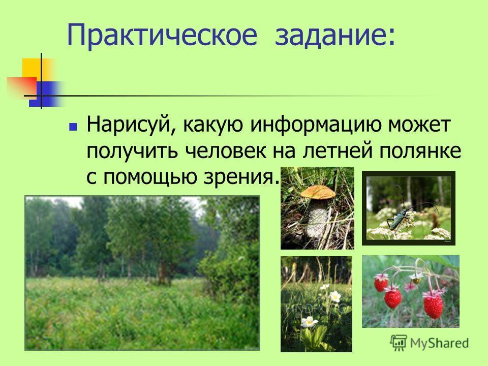 Практическое задание: Нарисуй, какую информацию может получить человек на летней полянке с помощью зрения.