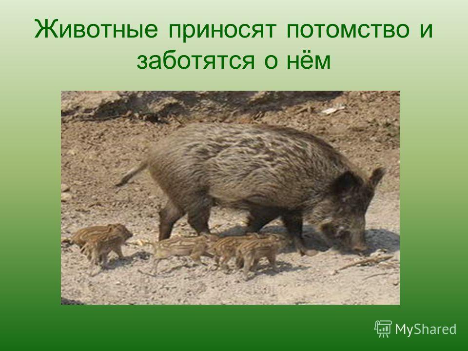 Животные приносят потомство и заботятся о нём