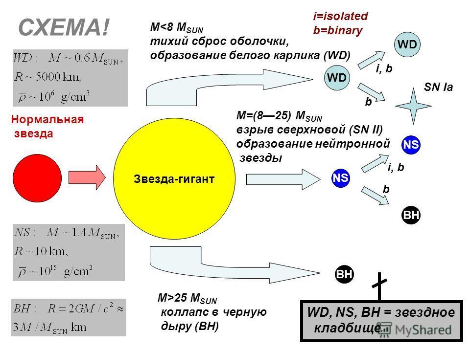 Звезда-гигант WD NS BH NS BH Нормальная звезда M25 M SUN коллапс в черную дыру (BH) СХЕМА! M=(825) M SUN взрыв сверхновой (SN II) образование нейтронной звезды SN Ia i, b b b WD, NS, BH = звездное кладбище i=isolated b=binary
