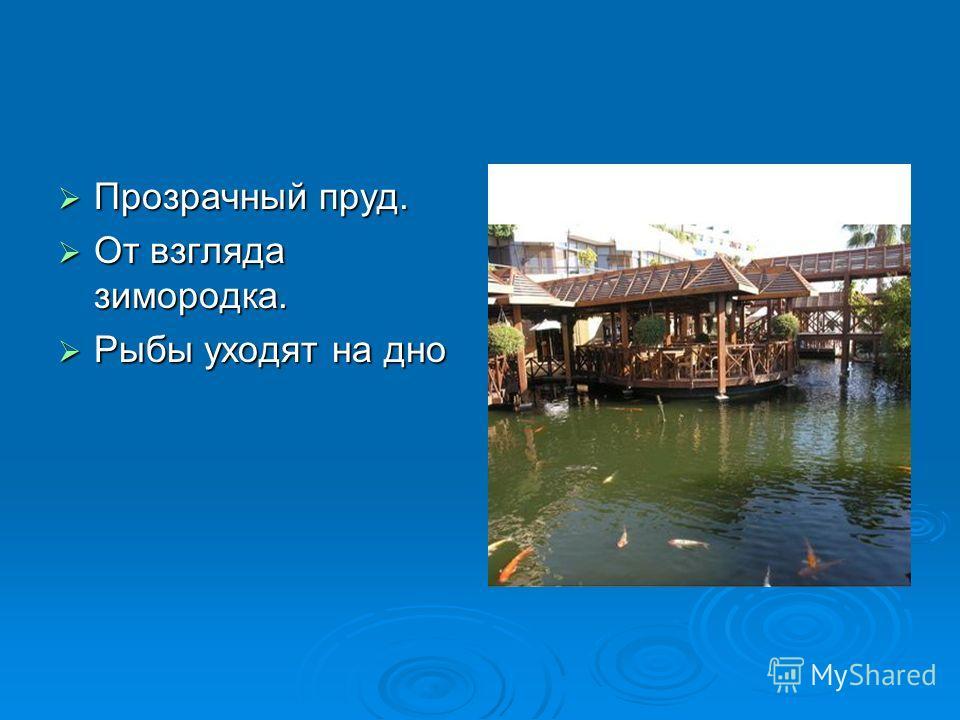 Прозрачный пруд. Прозрачный пруд. От взгляда зимородка. От взгляда зимородка. Рыбы уходят на дно Рыбы уходят на дно