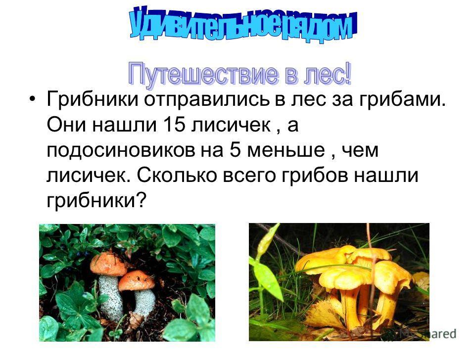 Грибники отправились в лес за грибами. Они нашли 15 лисичек, а подосиновиков на 5 меньше, чем лисичек. Сколько всего грибов нашли грибники?