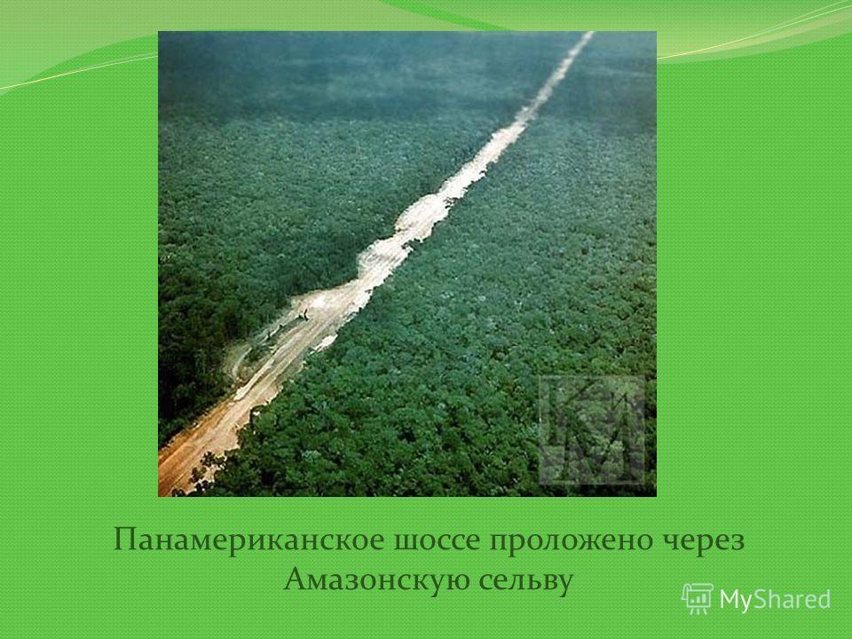 Панамериканское шоссе проложено через Амазонскую сельву