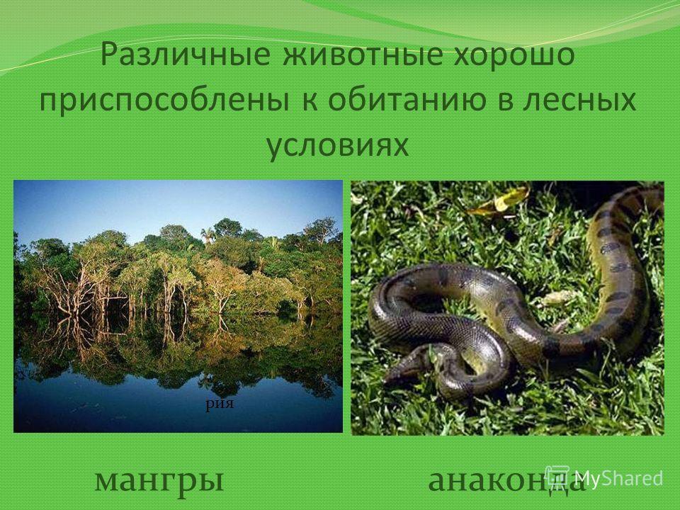 Различные животные хорошо приспособлены к обитанию в лесных условиях рия мангрыанаконда