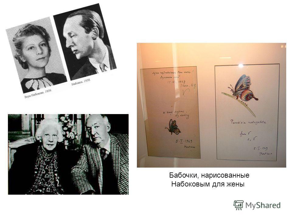 Бабочки, нарисованные Набоковым для жены