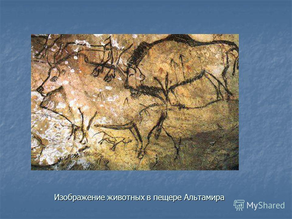 Изображение животных в пещере Альтамира